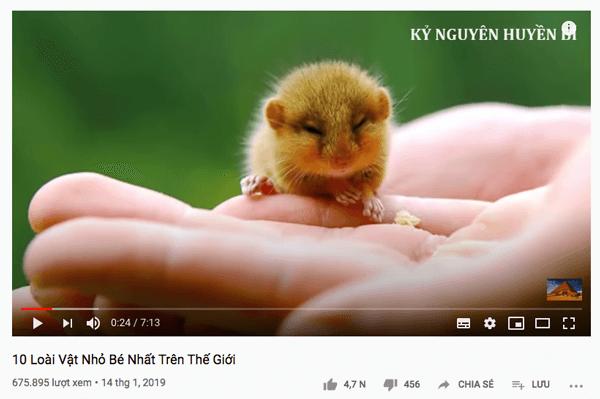 video thế giới động vật